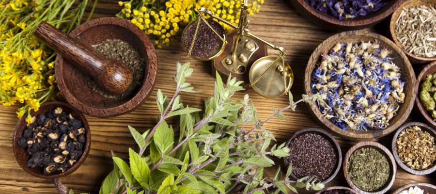 L'emploi des médicaments végétaux